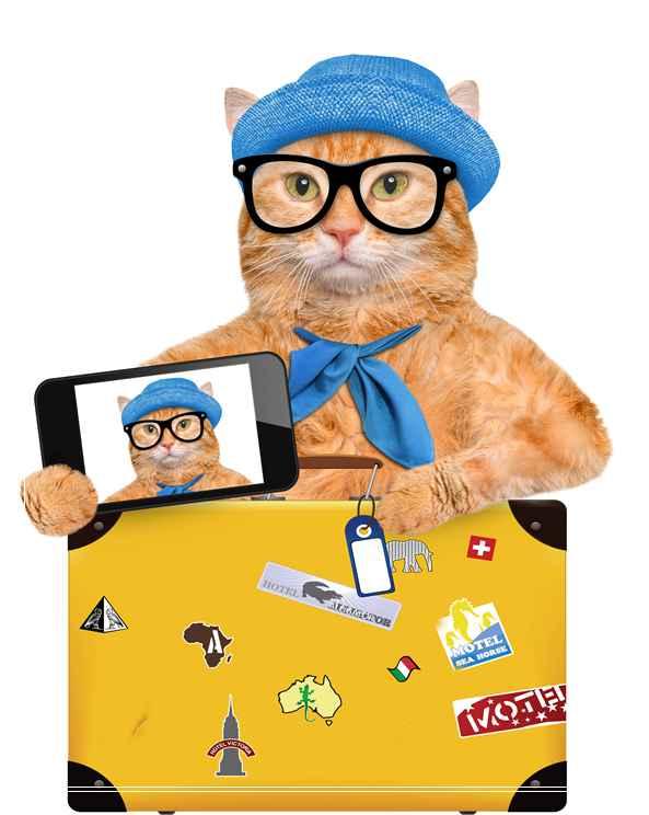 成猫猫粮与幼猫猫粮成分区别 成猫可以吃幼猫粮吗