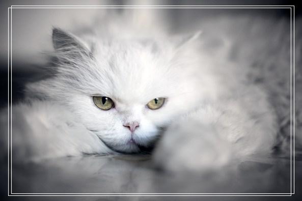 埃及猫是神的化身?