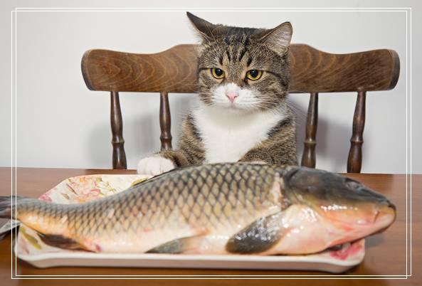 孟加拉豹猫有什么特点?孟加拉豹猫好养吗,在用餐