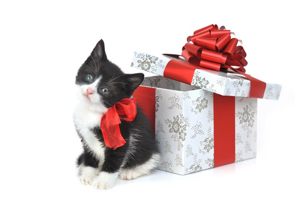 导致新生猫咪夭折原因有哪些