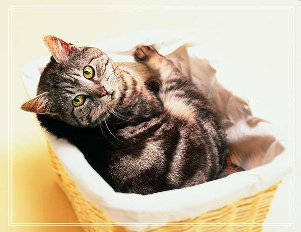幼猫猫粮哪个牌子好?小猫幼猫怎么喂养?