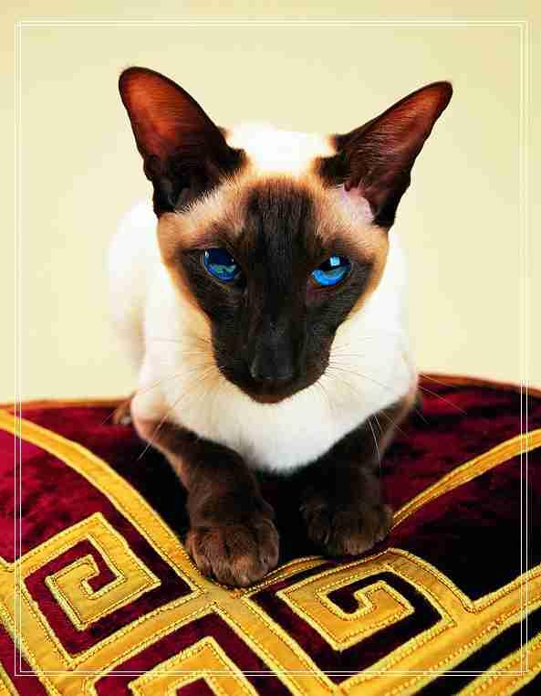 怎么养猫?新手养猫的基础知识
