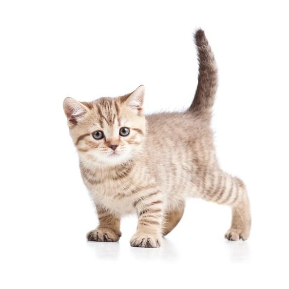 被猫抓了一下轻微破皮怎么办? 被猫抓破紧急处理措施