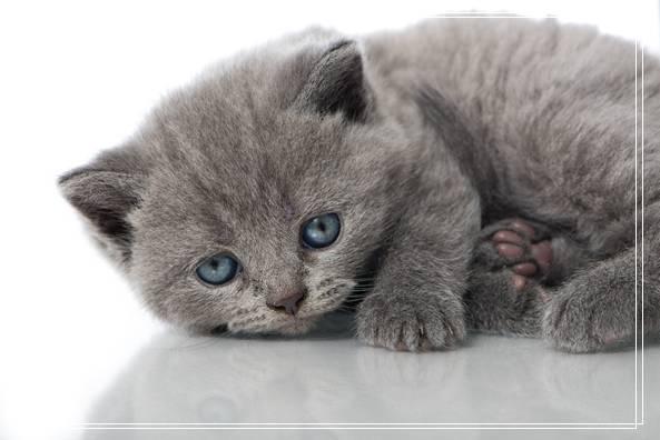 萌宠埃及猫猫咪的养护知识
