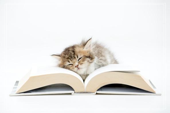 宠物猫美容的方法有哪些及顺序如何