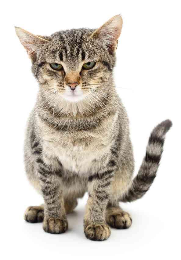 迎接新猫咪要做哪些准备?回家猫咪会迎接你