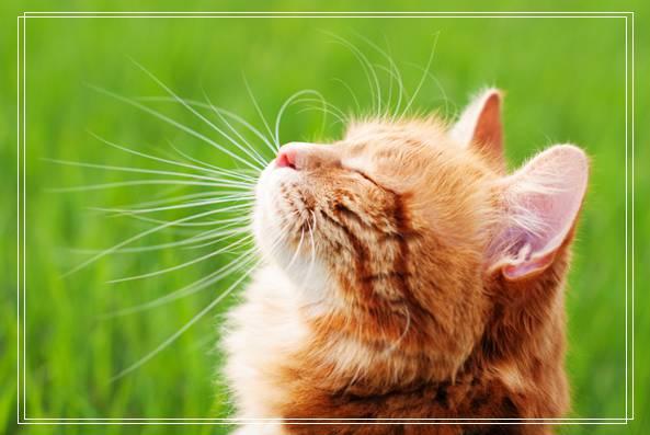 年幼的猫咪是如何发育的 成猫