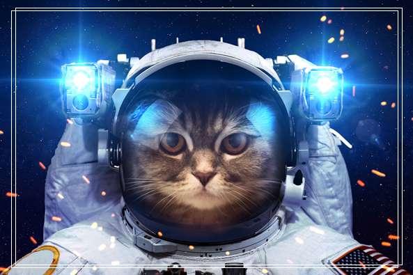 宠物猫排行榜的图文