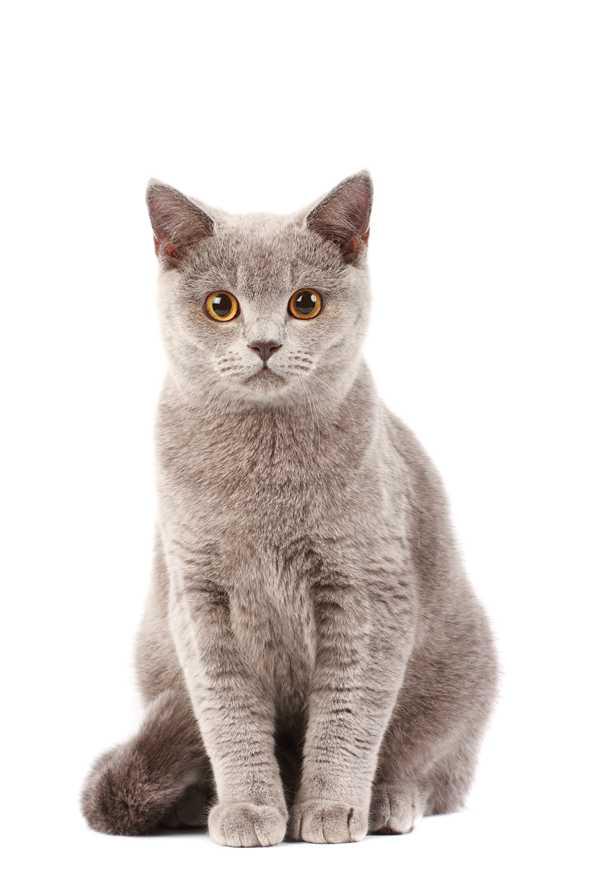 宠物猫咪幼崽饲养问题全解析