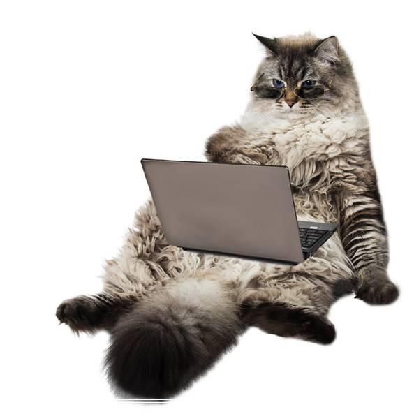 为什么要给猫咪修剪脚毛? 无猫毛多少钱一只