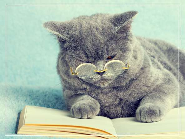 给猫咪洗澡需要注意什么及流程