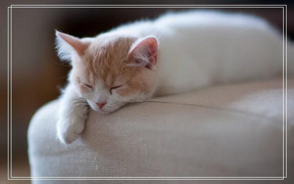 年幼的猫咪是如何发育的 猫是要抱着的