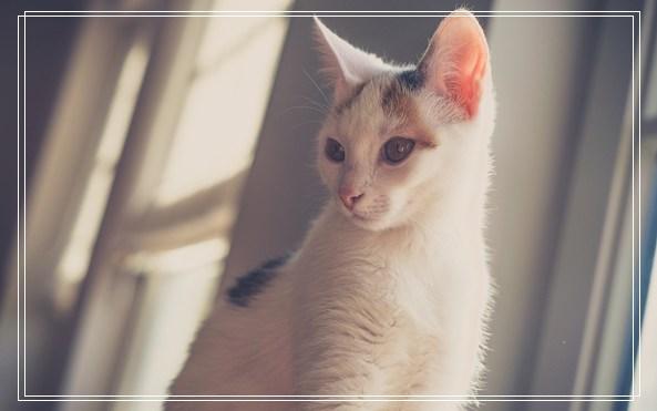 猫咪洗发液使用的注意事项 冠能毒猫粮