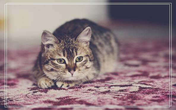 「图文推荐」夏季猫咪饲养管理注意事项有哪些好看
