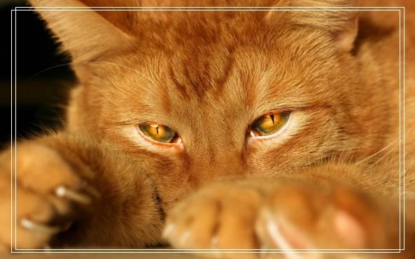 好采猫,深入了解猫咪对维生素的摄入需求