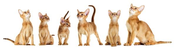 「图文推荐」夏季猫咪饲养管理注意事项有哪些和一群猫