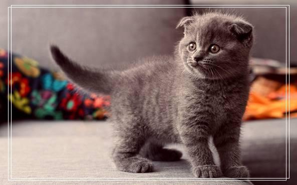 宠物品种埃及猫的性格特点如何