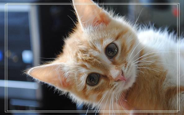 母猫对小猫的重要性 母猫和小猫