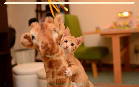 养猫常识,为什么说猫咪有九条命