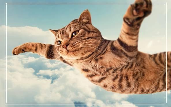 猫咪的遗传学特性有哪些?