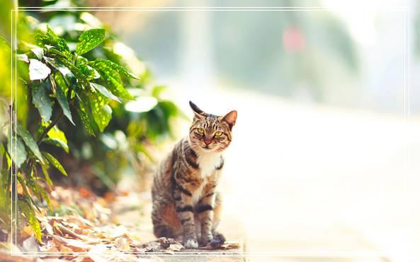 矮脚猫有什么缺点?矮脚猫的缺点