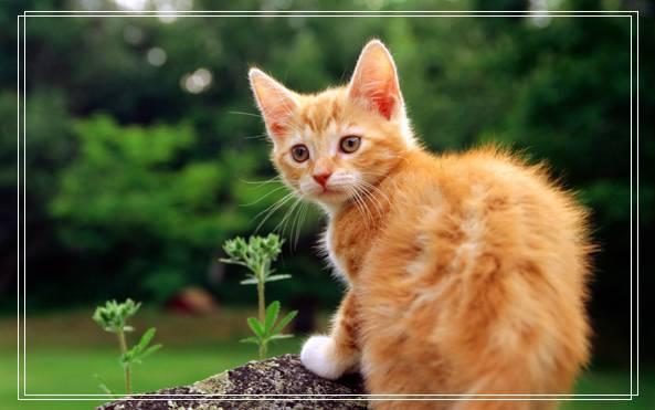 猫咪的生活习性表现在哪些方面