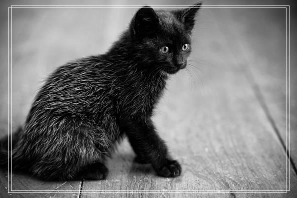 「图文推荐」夏季猫咪饲养管理注意事项有哪些