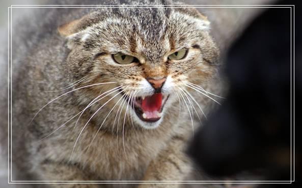 猫咪怎么养?饲养猫咪十种错误你占哪几项?