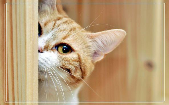 猫粮选择要适合猫咪的口味 小猫不吃猫粮?