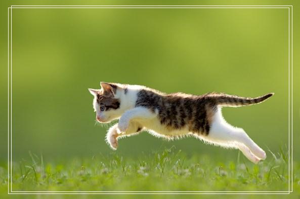 埃「组图」及猫品种简介