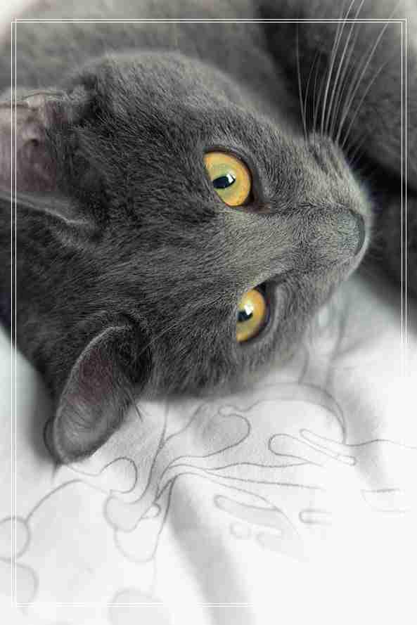 卖萌猫,如何让猫咪进入甜美梦乡
