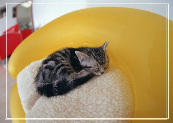 哪些猫咪适合年轻白领饲养
