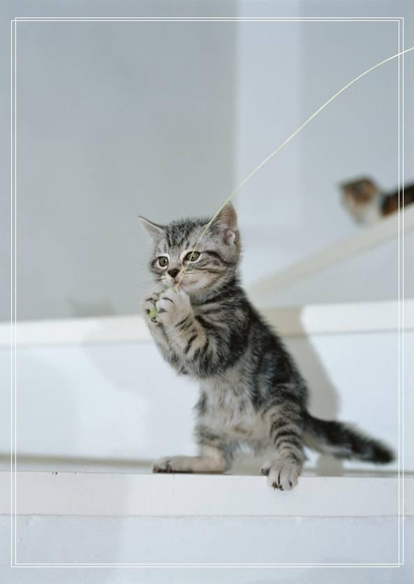 猫咪的遗传学特性