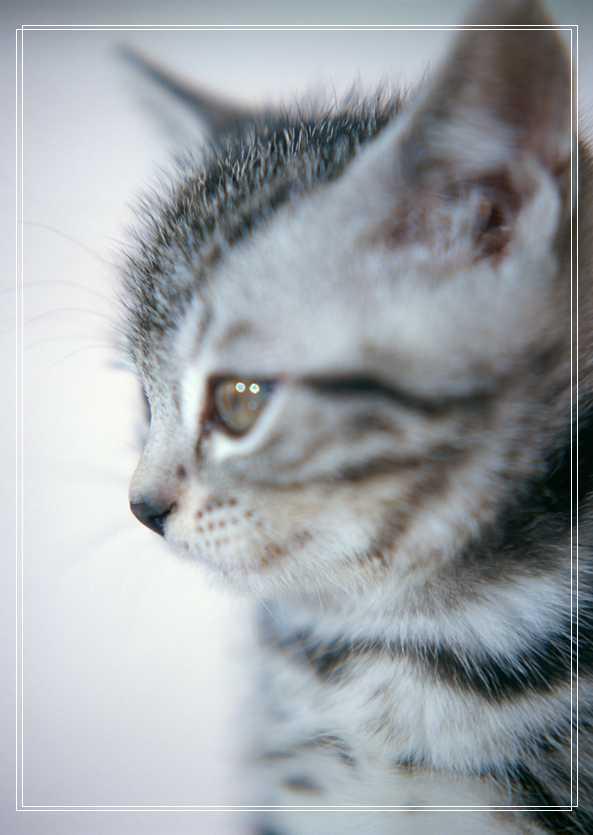 幼猫吃什么食物比较好呢?幼猫适合吃什么