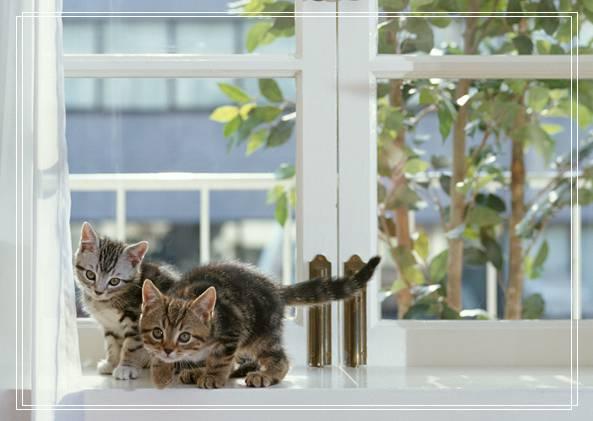 猫咪丢了怎么找回来,怎么办?