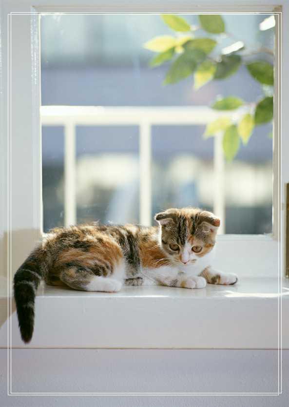 虎斑猫的斑纹介绍虎斑猫为什么有这么多斑纹
