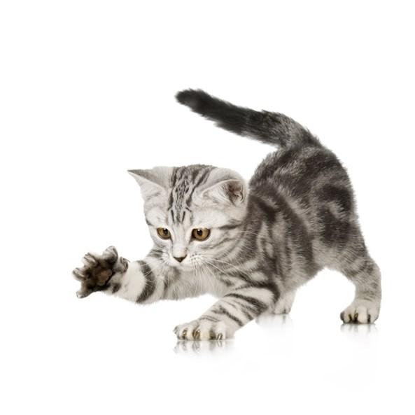 宠物品种猫咪知识小测试
