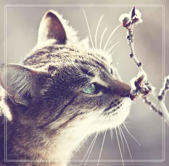 猫咪怎么看年龄?判断猫咪的年龄的两种方法