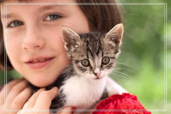 如何防止猫咪食入过多体毛 什么宠物猫好养又便宜