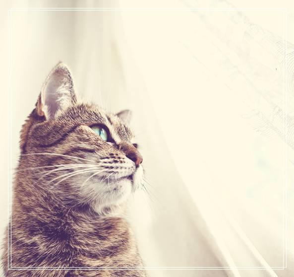 新生小猫的饮食要注意 豹猫属