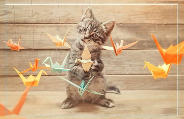 「图文推荐」暹罗猫饲养小技巧