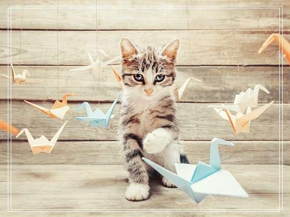 养猫误区之幼猫喂养 幼猫一直叫是怎么回事