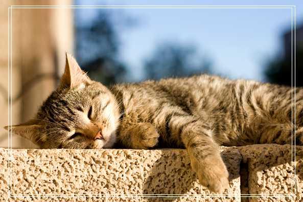 宠物猫咪适合年轻白领饲养的组织图片段