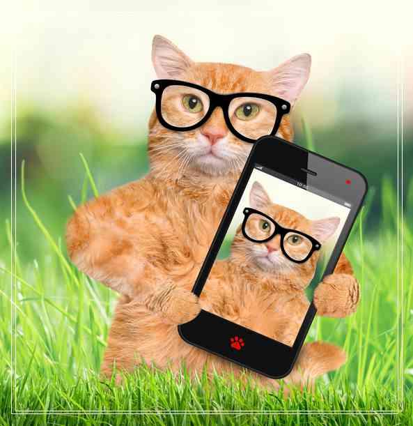 宠物埃及猫猫咪要怎么养?