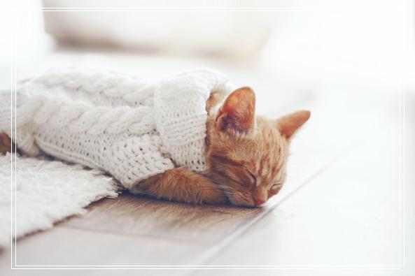 母猫食亲仔猫的原因之如何照顾小猫 猫是要抱着的