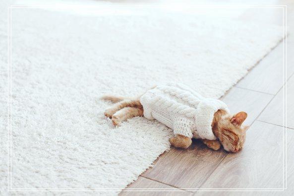 猫咪适合年轻人