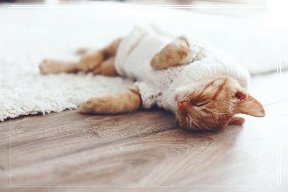 萌宠猫咪特性