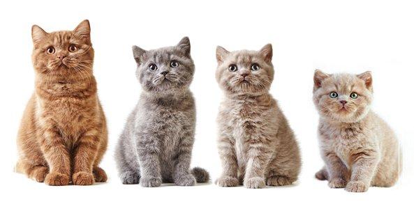 吃什么让幼猫健康的成长 幼猫可以吃什么