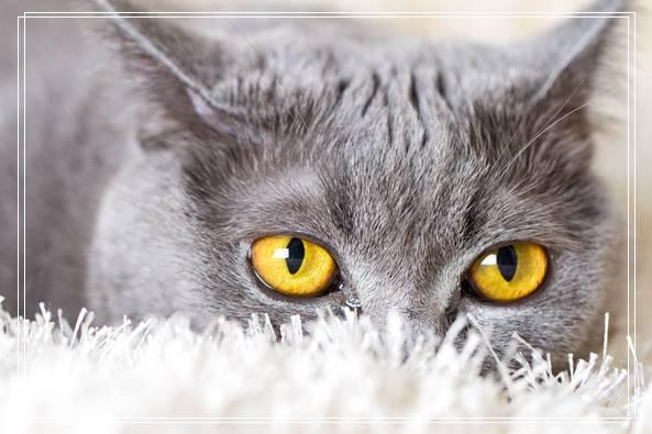 猫咪怎样减肥,胖纸喵星人减肥啦!攻略