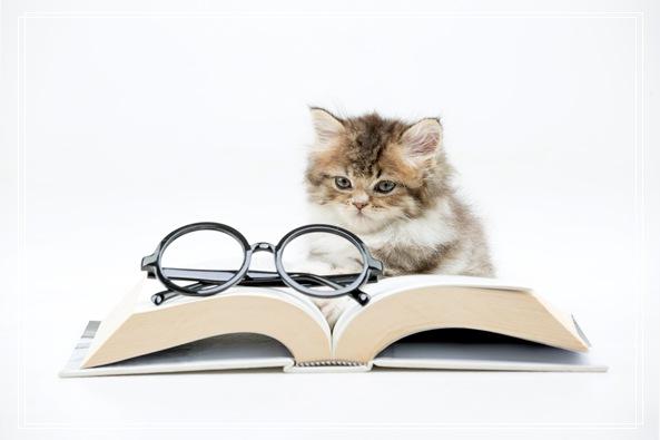 埃及宠物猫的形态特征